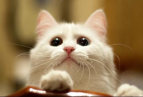 File:Cats3.jpg