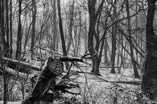Winter woods...