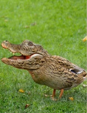 File:CrocBird.png