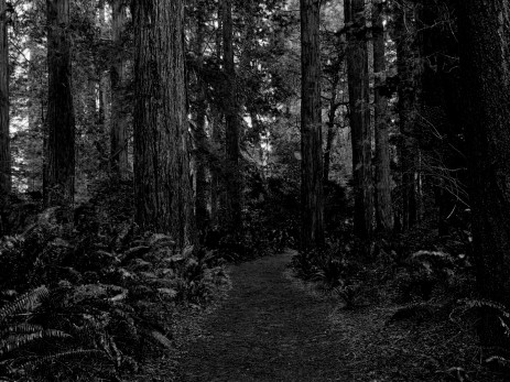 File:Into the woods.jpg