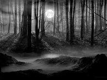 Scarydarkwoods
