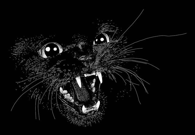 File:Hissing cat by aussieliz-d48tby9.jpg