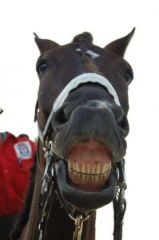 File:Horse-smile 2822158.jpg