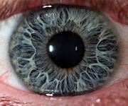 Eye-macros-human-eye2