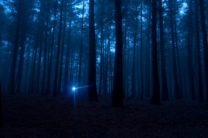File:Flashlight-In-Woods-300x199.jpg