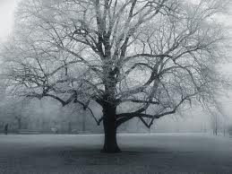 Silver sad tree