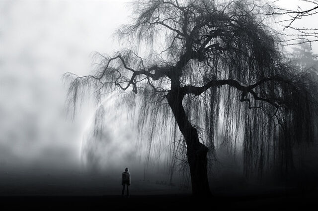 File:Tmp alone-black-and-white-tree-Favim.com-409135-906724688.jpg
