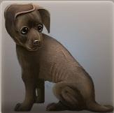 Dosya:Puppy.jpg