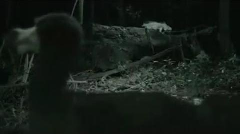 Living Dodo Captured on Video?