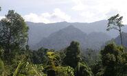 Borneo-and-sumatra-what-wwf-doingHI 113455
