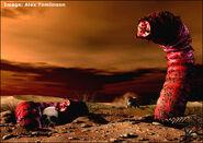 Mongolian Death Worm, Alex Tomlinson