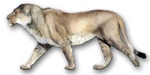 PantheraLeoAtrox