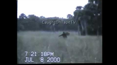 Florida skunk ape video stabilized