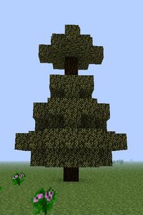 Bull Pine