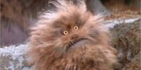 Fizzgig (species)