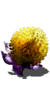 Small Yellow Burr