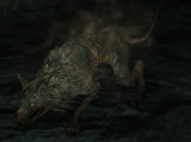 File:Rat Pharros.png