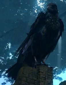 Giant crow01
