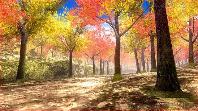 File:DOA5U Forest 1.jpg