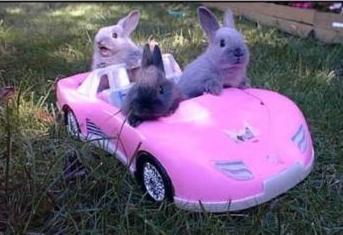 File:BunnyGB.jpg