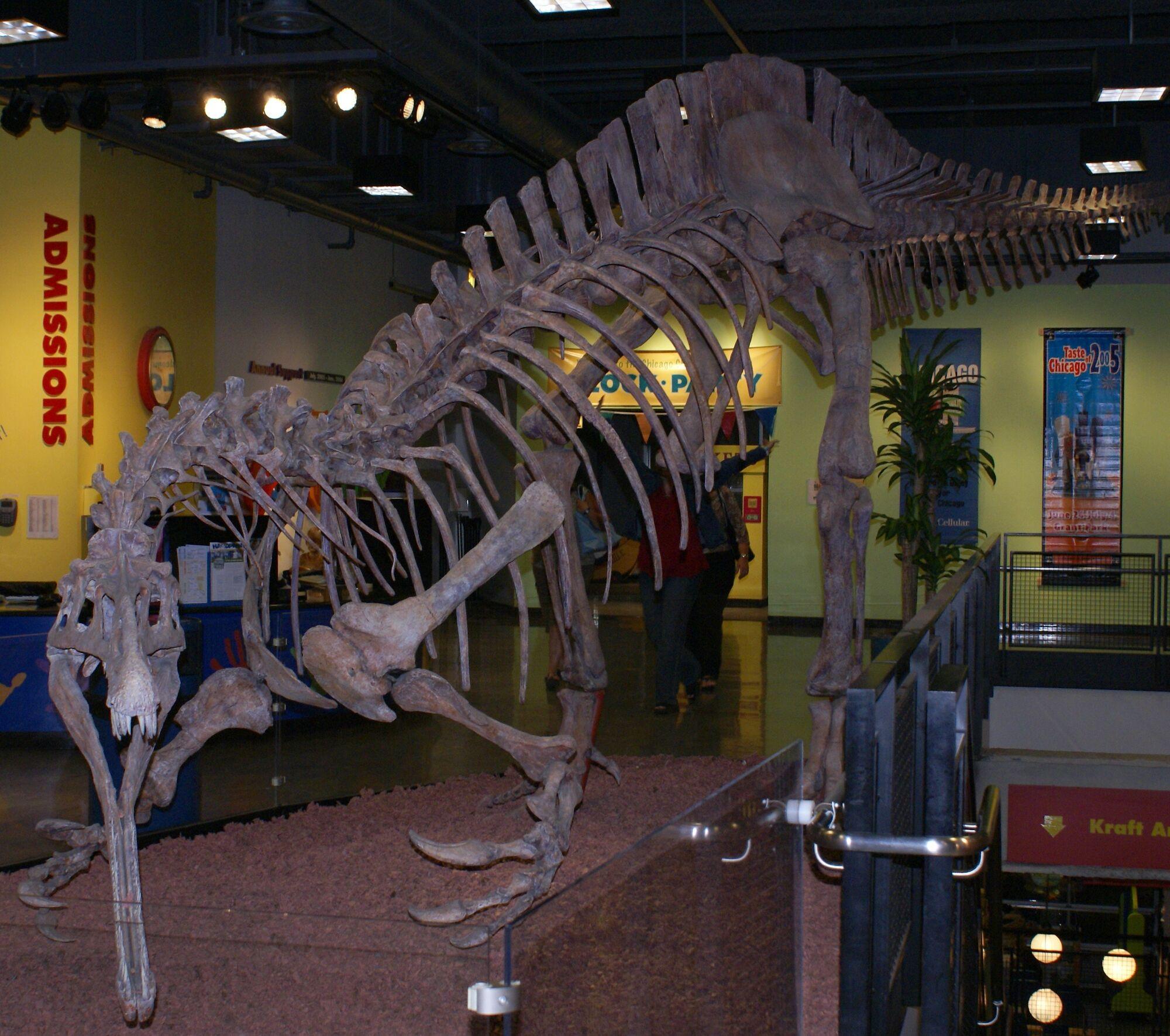 Suchomimus | Prehistoric Wiki | Fandom powered by Wikia  Prehistoric