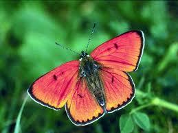 File:A butterfly.jpg