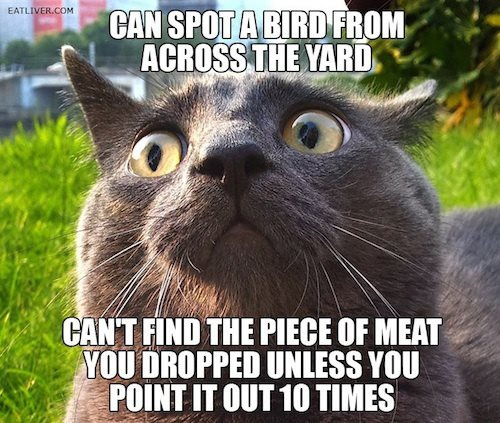 File:Funnycat.jpg