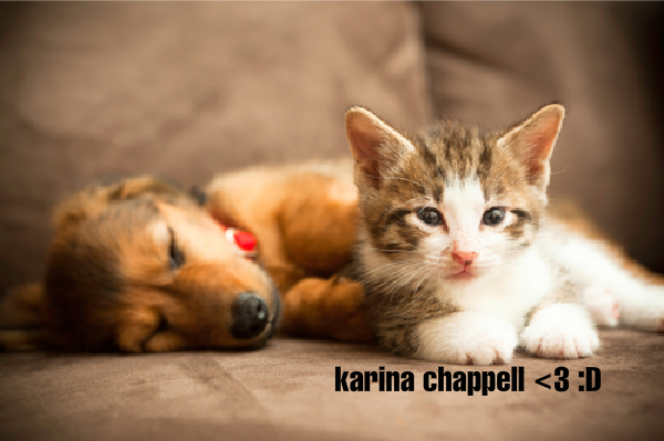 File:Puppy and kitty!.png