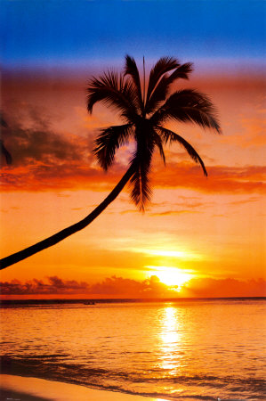 File:Sunset-palm.jpg