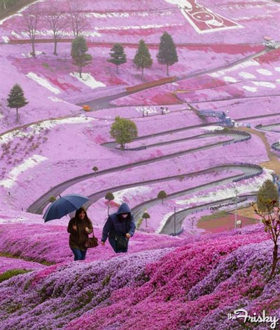 File:Lavendar-city-400x470.jpghokkaido,japan.jpg