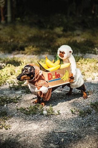 File:Camelia as bananas.jpg