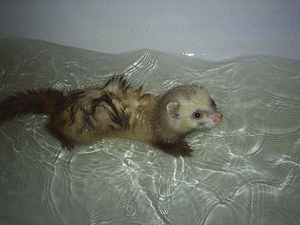 File:Bath2.jpg