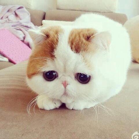 File:Cute cat eyes.jpg