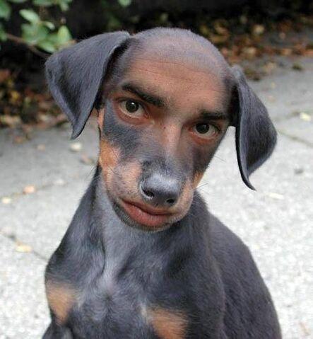 File:Dog human.jpg
