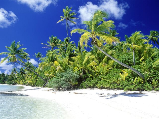 File:Palm Beach Solomon Islands.jpg