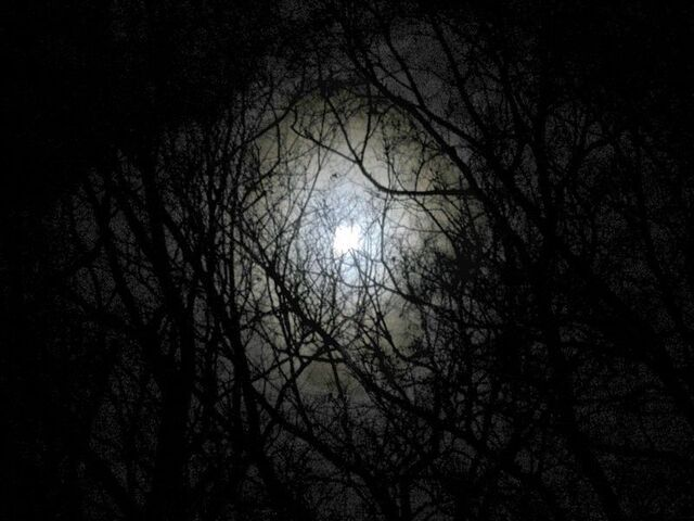 File:Darkness-forest-night-image.jpg