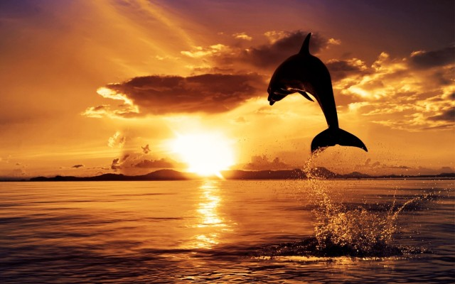 File:Dolphin-in-sunset-640x400.jpg