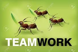 Datei:TeamworkAmeisen.jpeg