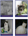 Cat-gallery.png