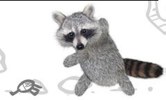 RF VS Raccoon