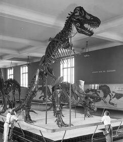 Rex1960s