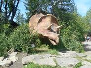 Calgary Zoo triceratops (1)