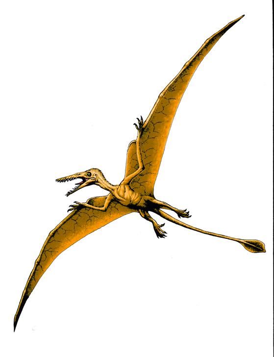 http://vignette1.wikia.nocookie.net/dinocrisis/images/b/b7/Rhamphorhynchus-3.jpg/revision/latest?cb=20141112073503