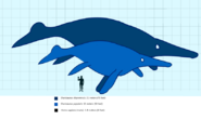 Shonisaurus compared to a human svg