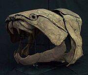 Dunkleosteus skull