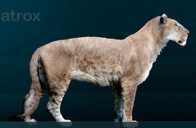 800px-Panthera leo atrox Sergiodlarosa