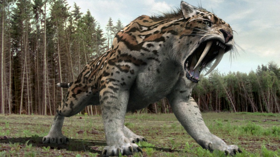 1000  images about Sabertooth Cats on Pinterest