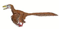 Deinonychus BW-2.png