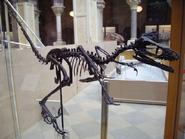 Bambiraptor2