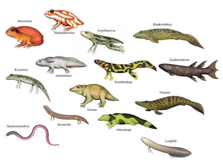 Amphibians animals pictures with names - photo#15